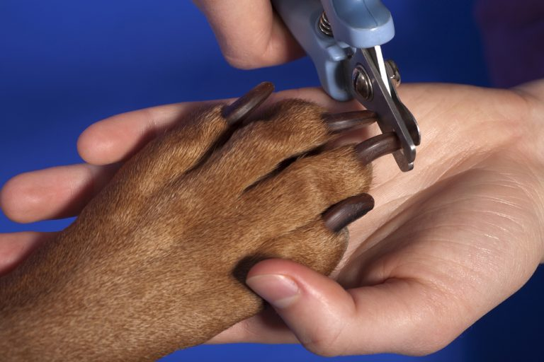 5 Best Dog Nail Trimmers in 2021