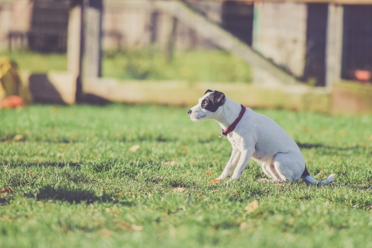 5 Best Anti Bark Collars for Dogs in 2021