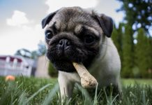 Best Food For Dogs With Allergies