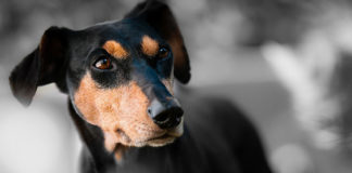 Best Probiotics For Dogs Review