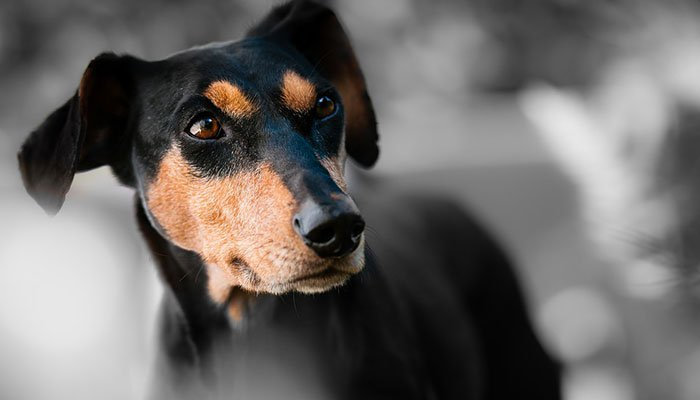 5 Best Probiotics for Dogs in 2021