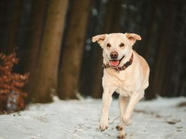 Best Glucosamine For Healthy Dogs