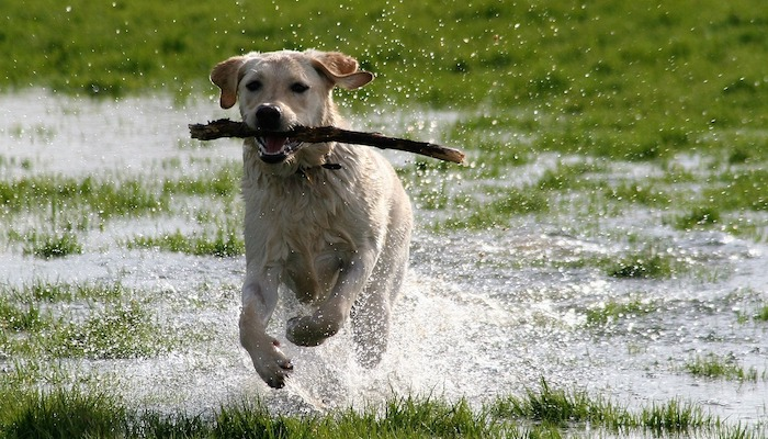 10 Best Glucosamine Supplements for Dogs with Joint Pain