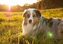 What Dog Vitamins for Skin Problems