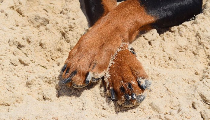 How to sand Dog Nails