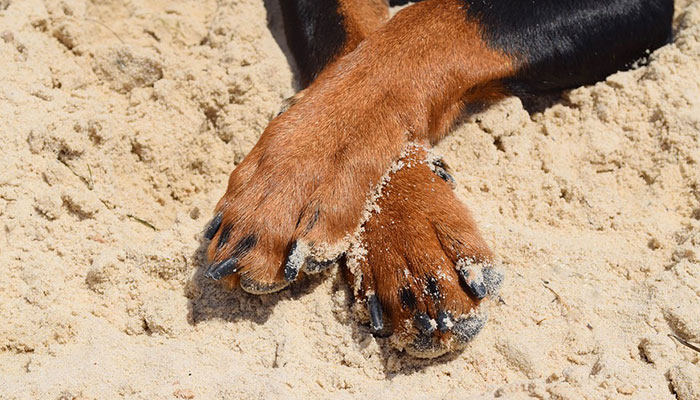 How To Sand Dog Nails?