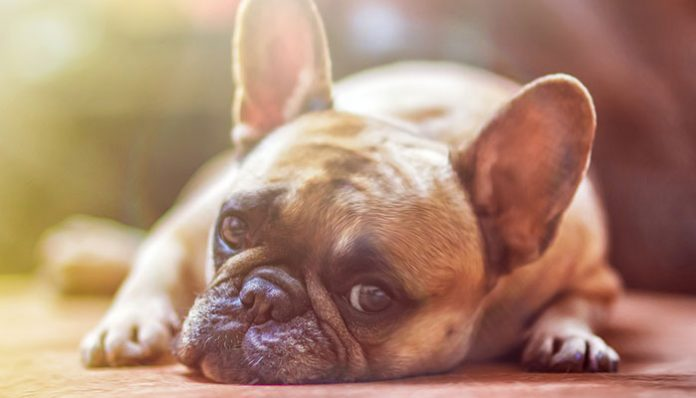 How to Treat Dogs with Skin Allergies