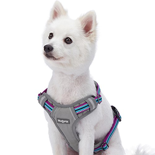 Blueberry Pet Reflective harness