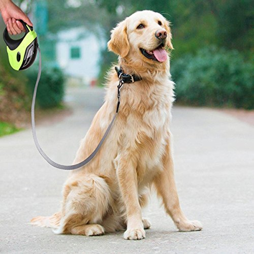 Golden retriever with retractable dog leash