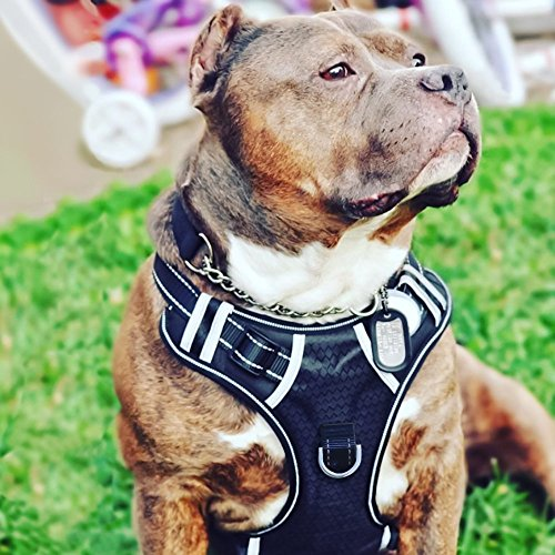 Dog Harness for Pit Bulls