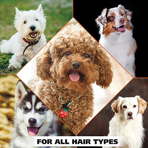 dog flea shampoo for all hair types