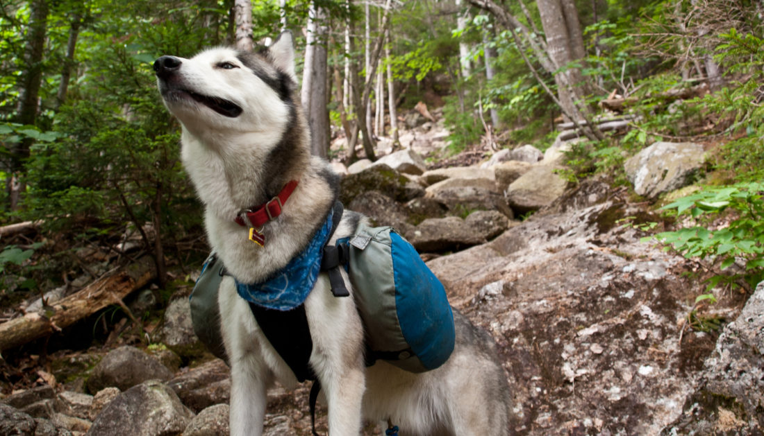 Best Dog Backpack Review