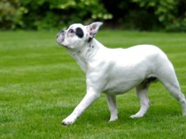 Best Grass For Dogs Review