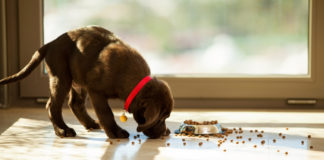 Best Affordable Dog Food Review
