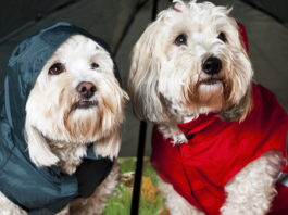 Best Dog Raincoats in Review