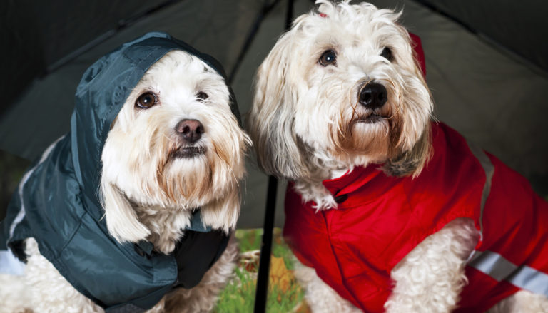 9 Best Dog Raincoats in 2021