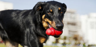 Indestructible Dog Toy Review