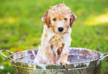 Best Puppy Shampoo Review