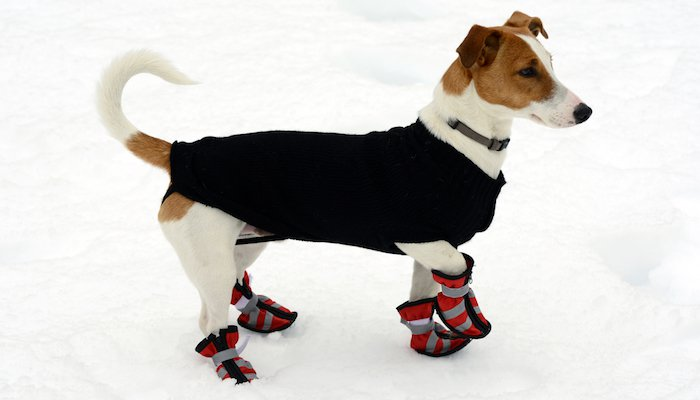 Dog Boots Review
