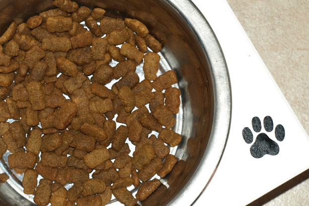 dog-bowl-with-food-in-it