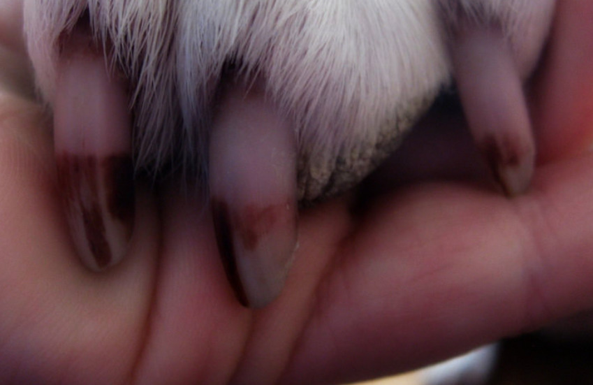 Are Pet Nail Grinders Safe to Use on Dogs?