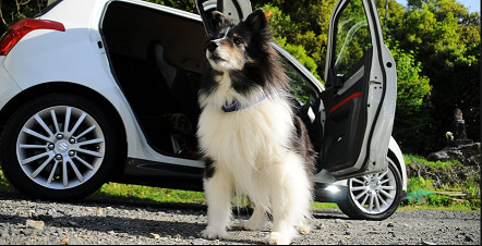 dog-sitting-outside-of-a-car-with-open-doors