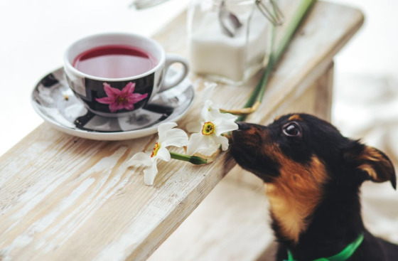 tiny-dog-smelling-the-flower-tea