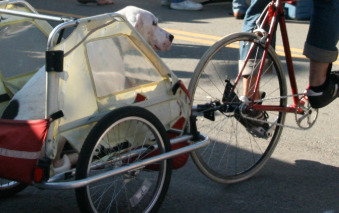 white-dog-riding-a-bike-trailer-in-the-market