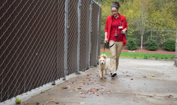 a-woman-taking-a-walk-with-her-white-dog