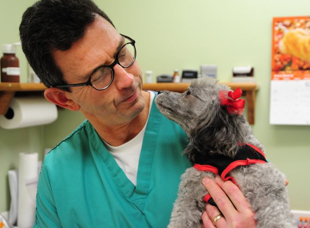 veterinarian-and-dog-looking-each-other