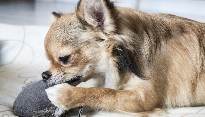 10 Best Chew Toys for Puppies in 2021
