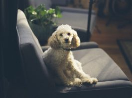 Best Couch For Dogs Review