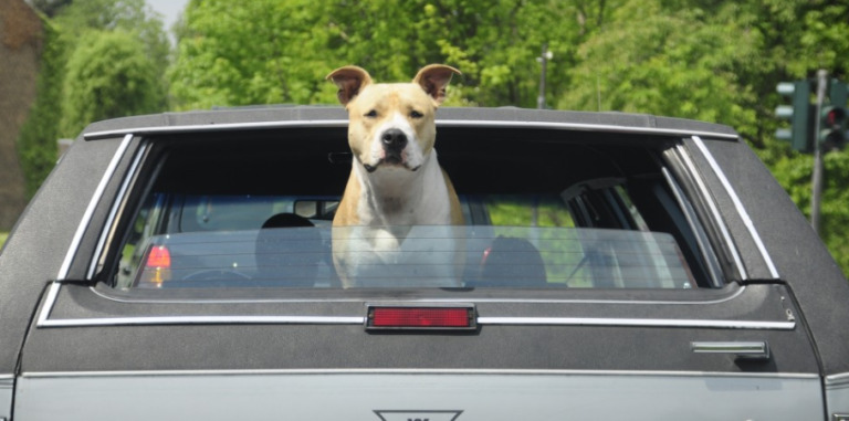 Natural Remedy for Dog Car Sickness
