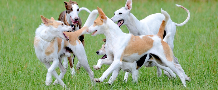dogs playing in the grass field