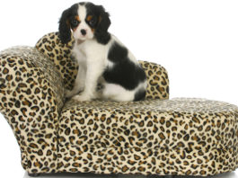 Elevated Dog Beds in Review