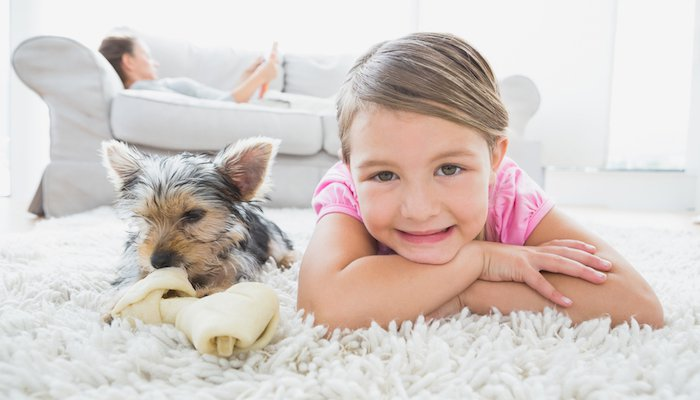6 Best Flea Powders For Carpets in 2021
