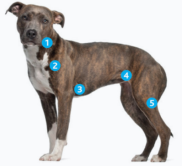 possible areas lymphoma in dogs