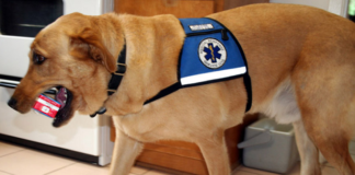 service dog carrying some canned good in its mouth