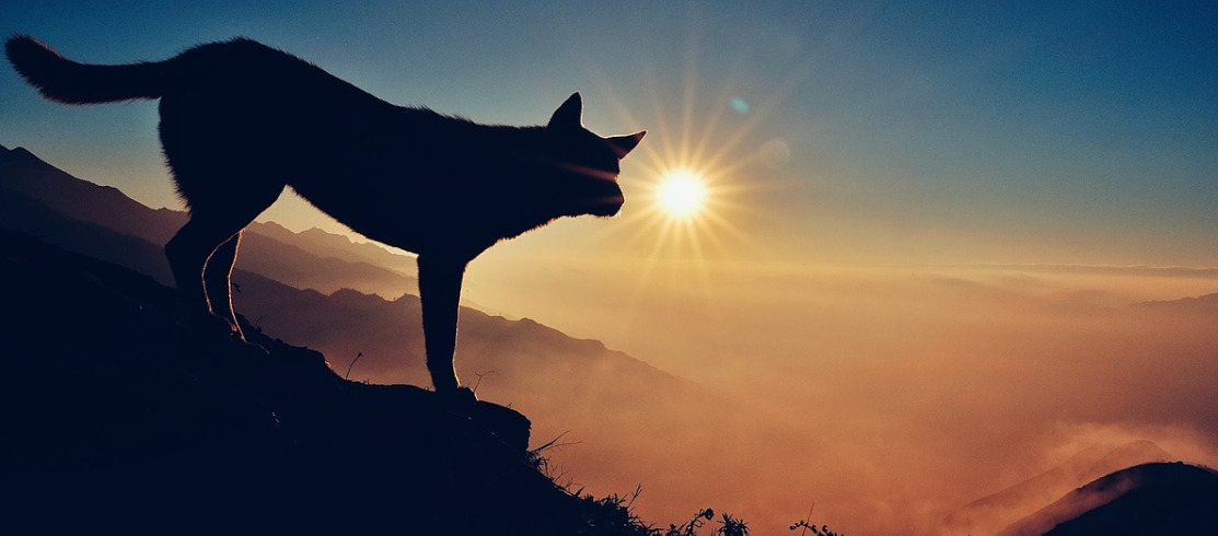 silhouette of a dog climbing down on a hill in the sunset