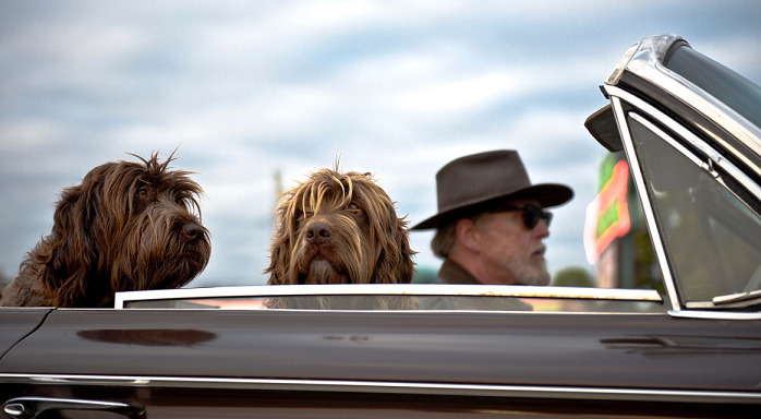 two-brown-hairy-dogs-sitting-inside-a-convertible