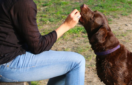 woman-in-brown-sweater-feeding-his-brown-dog-with-treats
