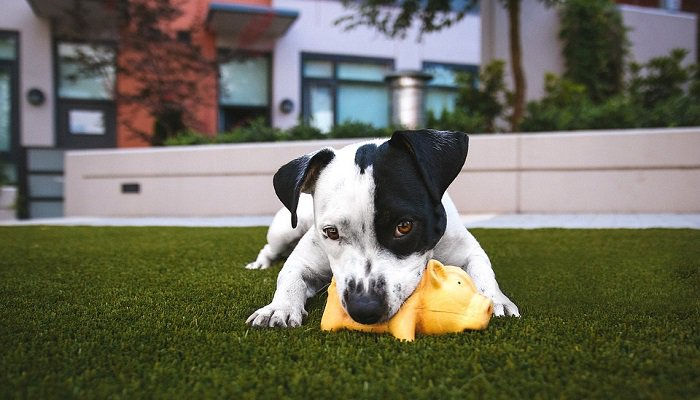 Why Artificial Grass is Good for Dogs