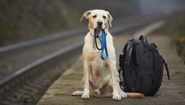 Backpacking with Dogs Ultimate Guide