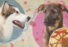 dog cancer dna cells illustration