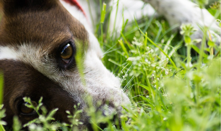 7 Amazing Benefits of CBD That Will Help Your Dog
