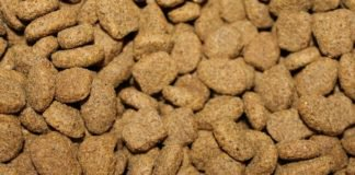 Tips to Find All-Natural Pet Food