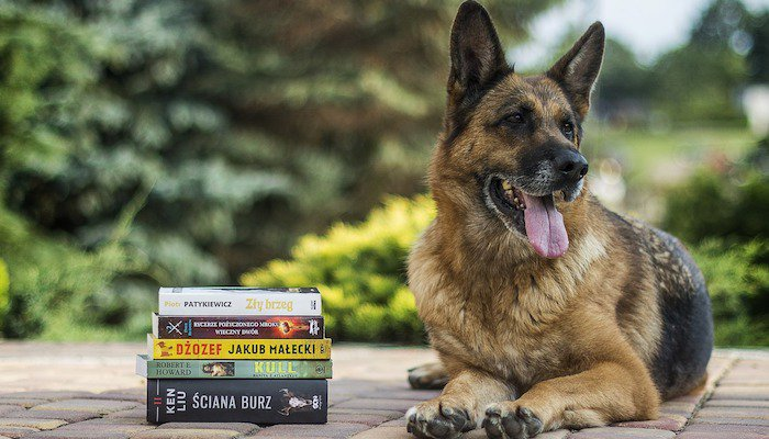 Should I Trust Books When Training Dogs