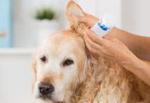 Best Dog Ear Cleaners
