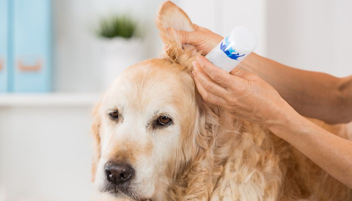 10 Best Dog Ear Cleaners in 2021