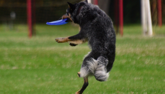 10 Best Frisbees for Dogs in 2021
